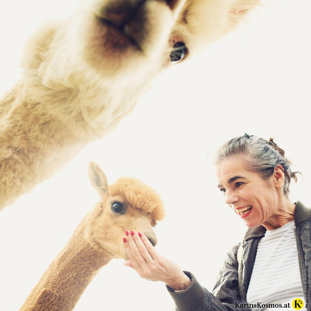 Foto von zwei Alpakas und einer Frau, die diese füttert.