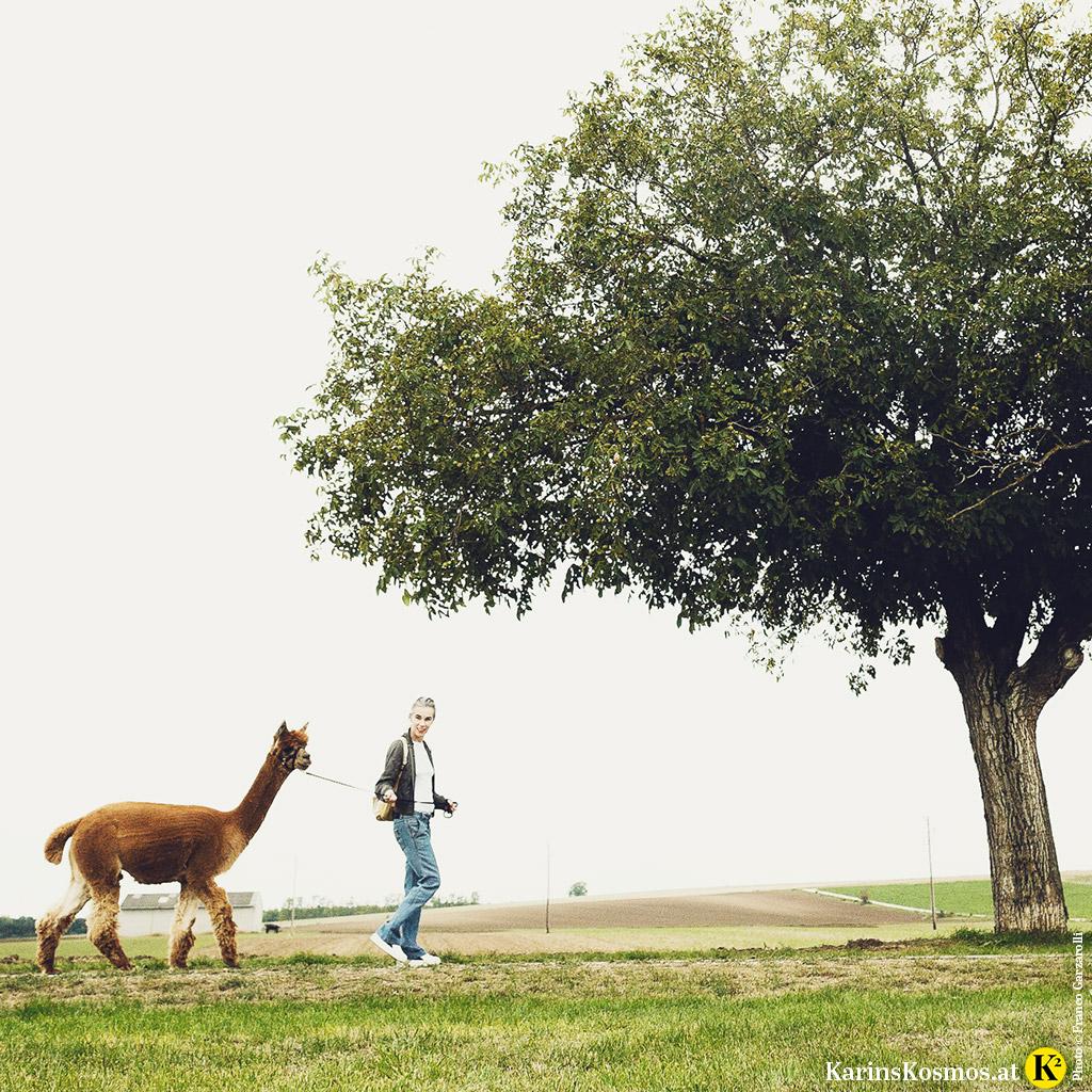 Foto auf dem eine Frau mit einem Alpaka an der Leine spazieren geht.